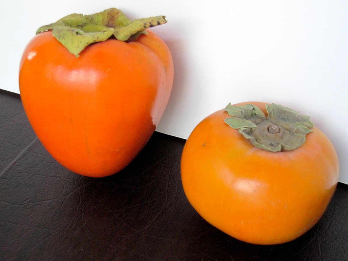 comparison shot of Hachiya persimmon to Fuyu persimmon on white background